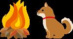 柴犬とたき火