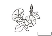 植物のぬりえ 朝顔 教育 プリントアウトファクトリー Myricoh